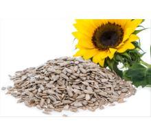 Semínka slunečnice a jejich výhody