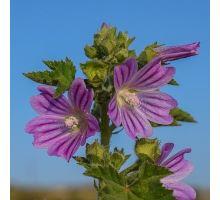 AWA herbs Slez list 100g