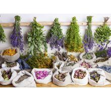 5 základních léčivých bylinek pro jaro
