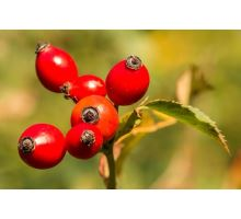 AWA herbs Šípek plod drcený 50g
