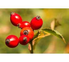 AWA herbs Šípek plod drvený 50g
