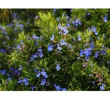 AWA herbs Rozmarín lekársky list 100g