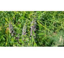 AWA herbs Srdcovník vňať 100g