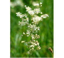AWA herbs Túžobník brestový vňať 50g