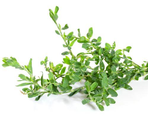 AWA herbs stavikrv truskavec vňať 100g